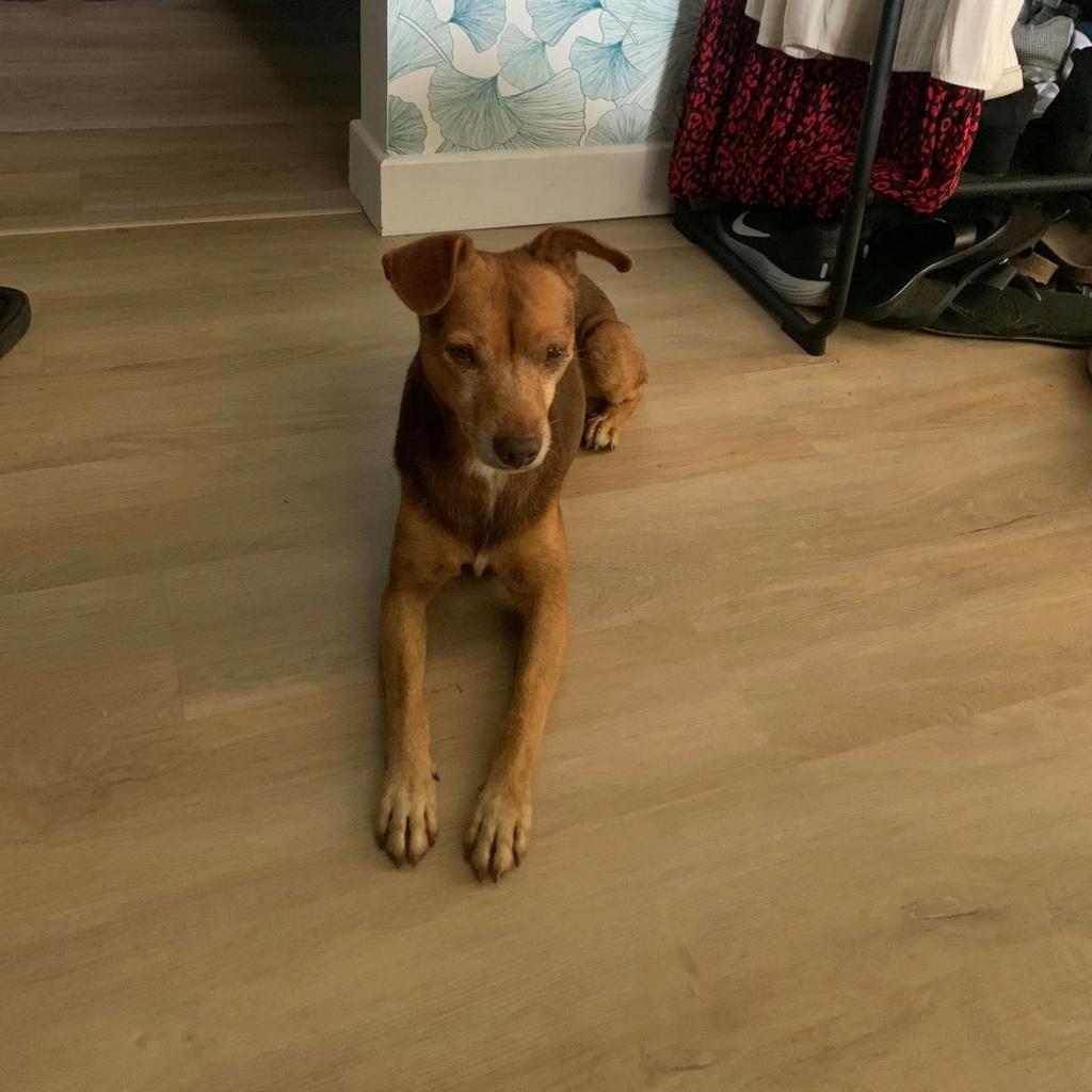 THOR, chien mâle de 4 ans - Marrainé par Muriel et Eugénia - Réservé  Thor_410