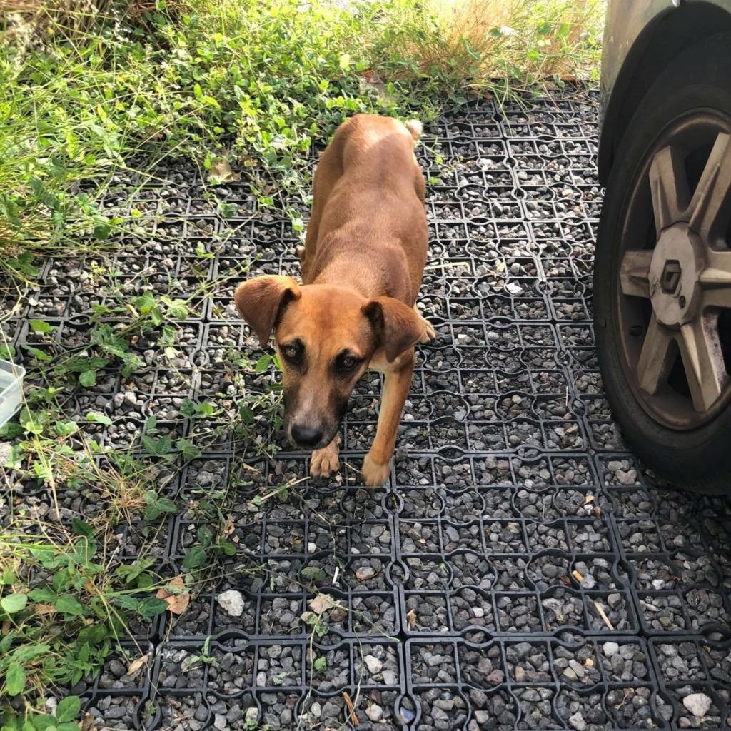 TWILLY, jeune chienne d'à peine 1 an, environ 10 kg - Marrainée par Muriel Twiill10