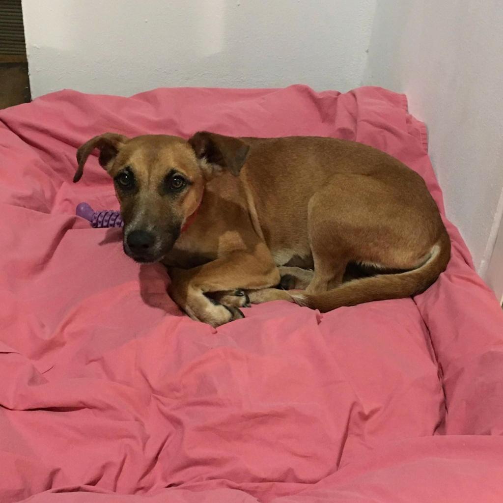 TWILLY, jeune chienne d'à peine 1 an, environ 10 kg - Marrainée par Muriel Twilly10