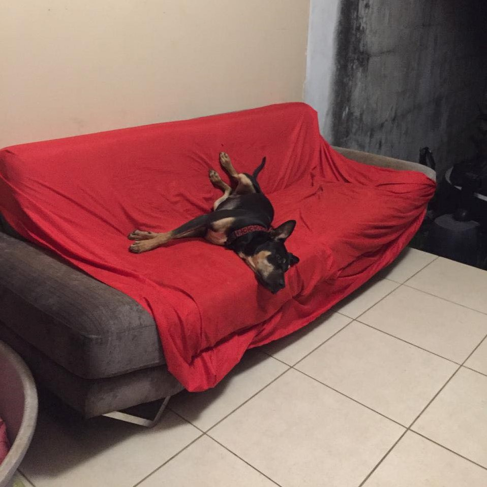 WELCOME, chien mâle Noir et Feu d'environ 10 mois pour 18 kg Welcom10