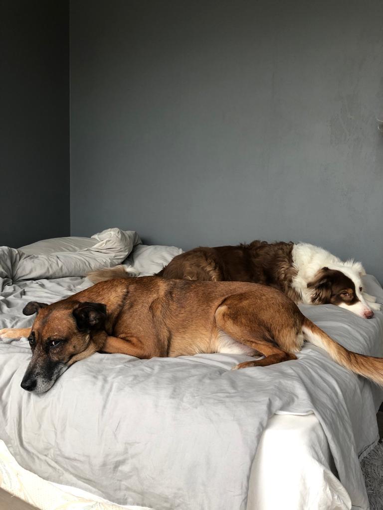 PAGNOL, chien de 7 ans environ pour 20 kg - Marrainé par Pat84 Whatsa10