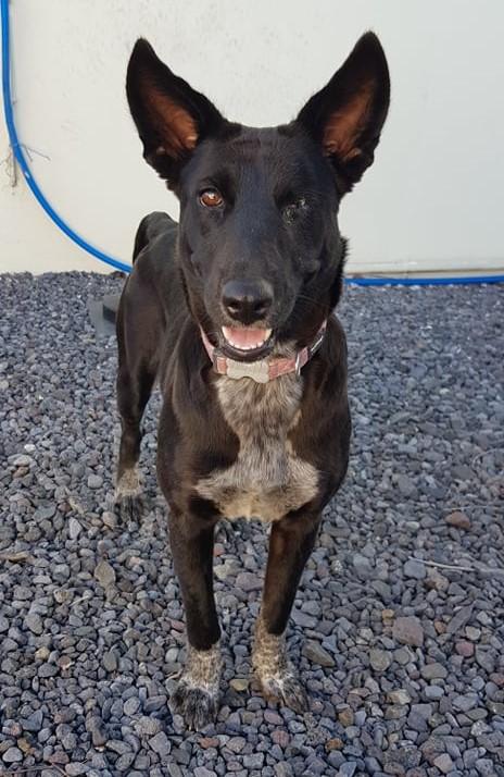 YOKO, jeune chienne noire, borgne d'un oeil, de 1,5 an environ pour 20 kg Y110
