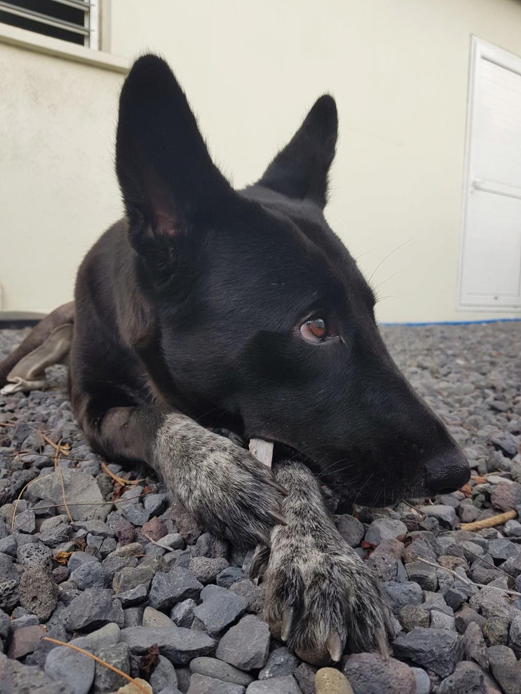 YOKO, jeune chienne noire, borgne d'un oeil, de 1,5 an environ pour 20 kg Yo10