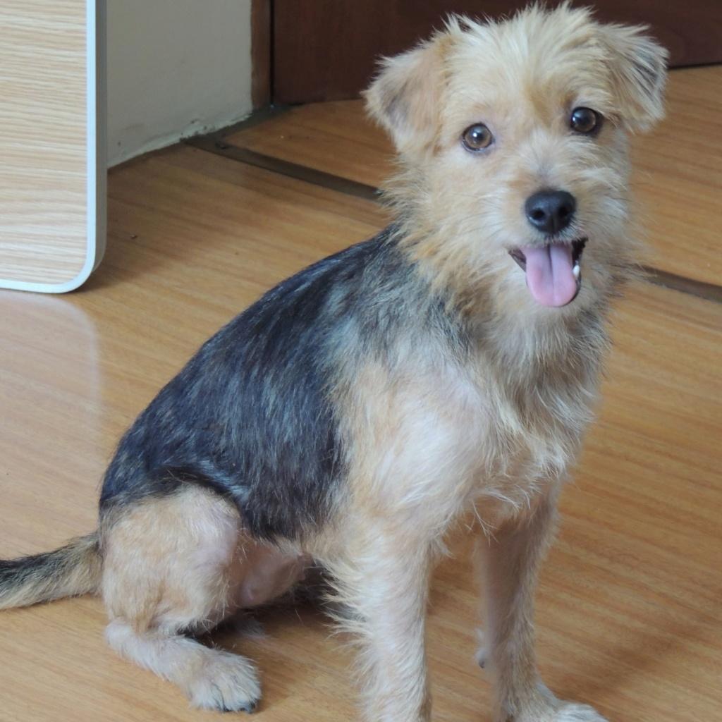 ZAZIE, jeune chienne croisée de 1 an environ pour 6 kg Zazie_10