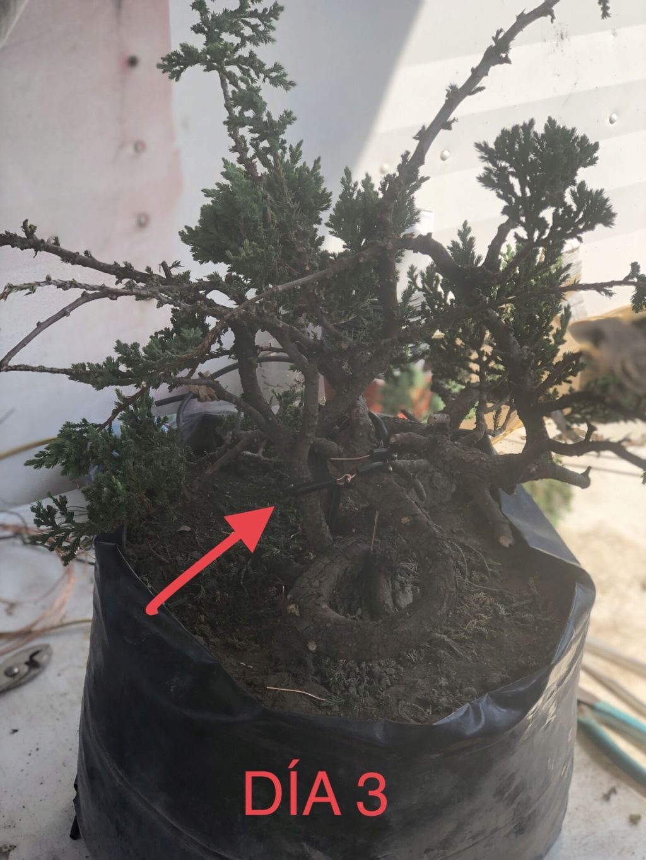 """Evolución Junipero """"Medusa"""" 6bae4910"""