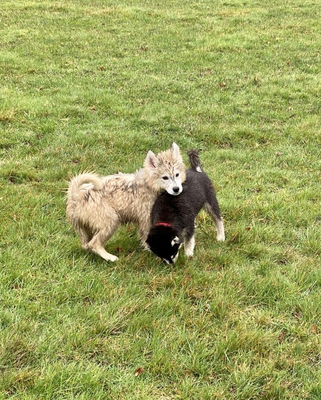 Muddy Dogs 0bd27b10