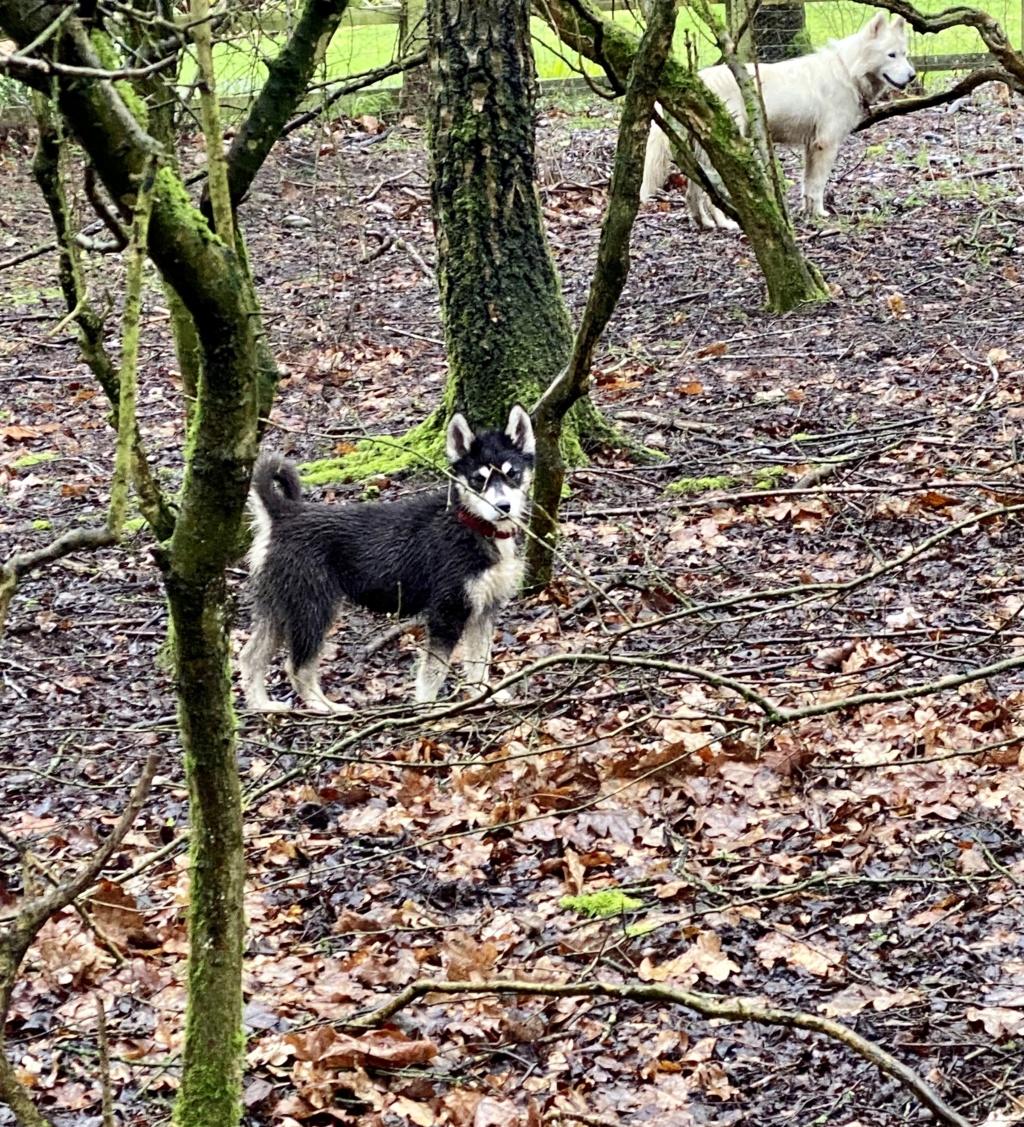 Muddy Dogs 516a8610