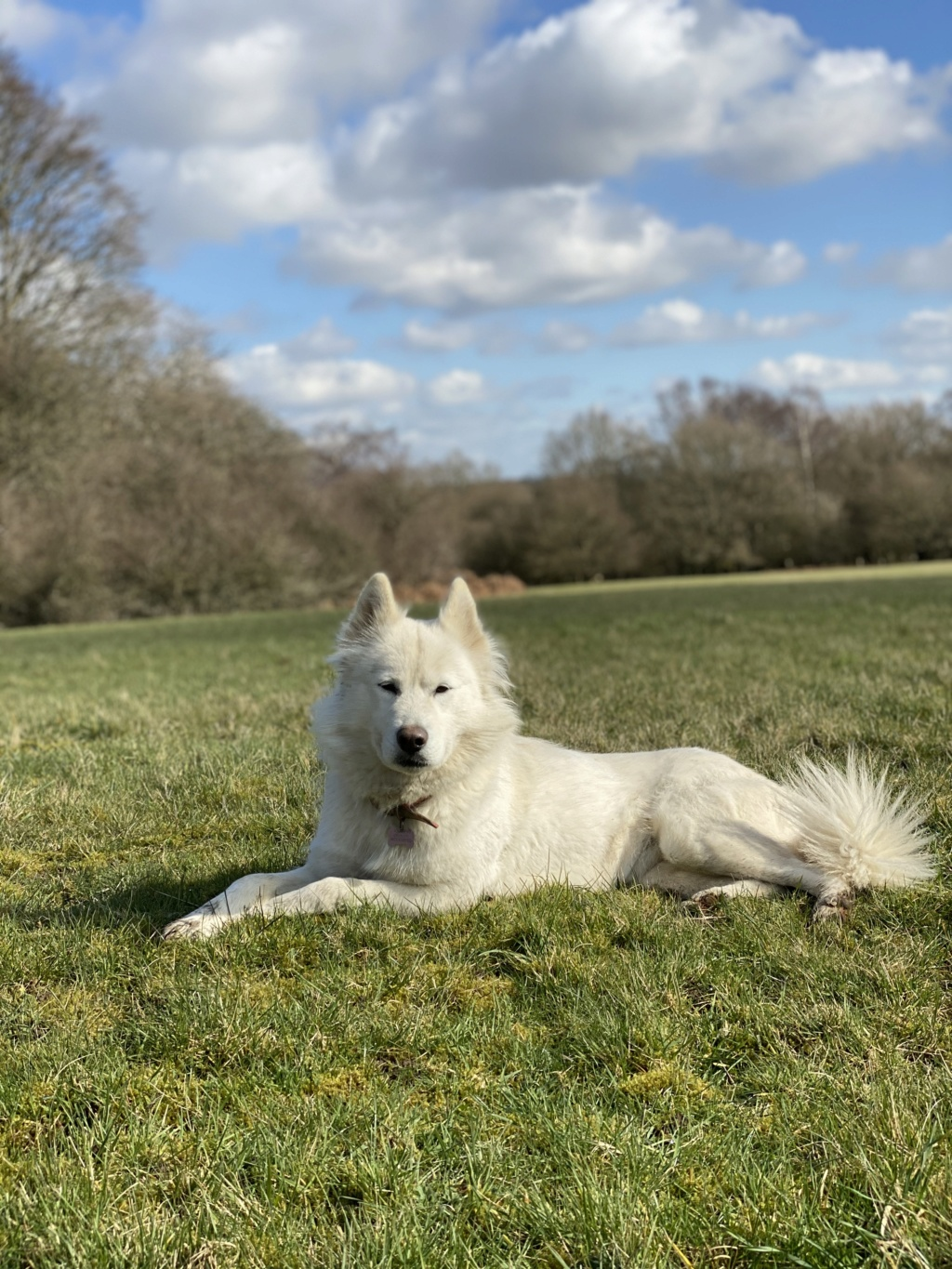 What Colour Is My husky pup 5a270d10