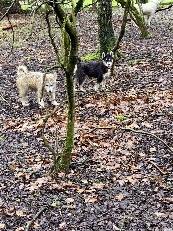 Muddy Dogs 7679b010