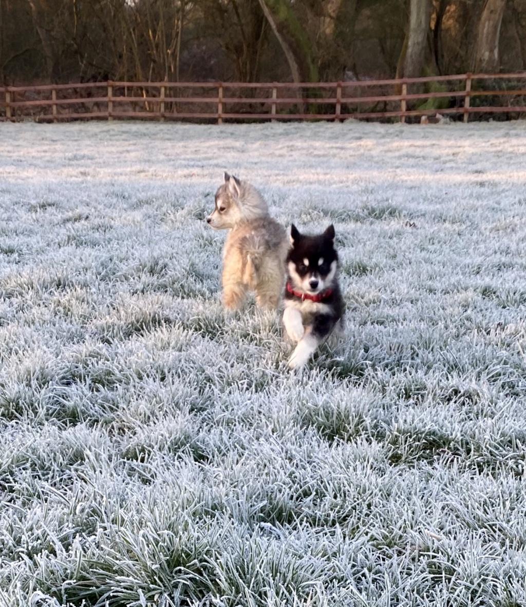 Frosty morning! 883c7210