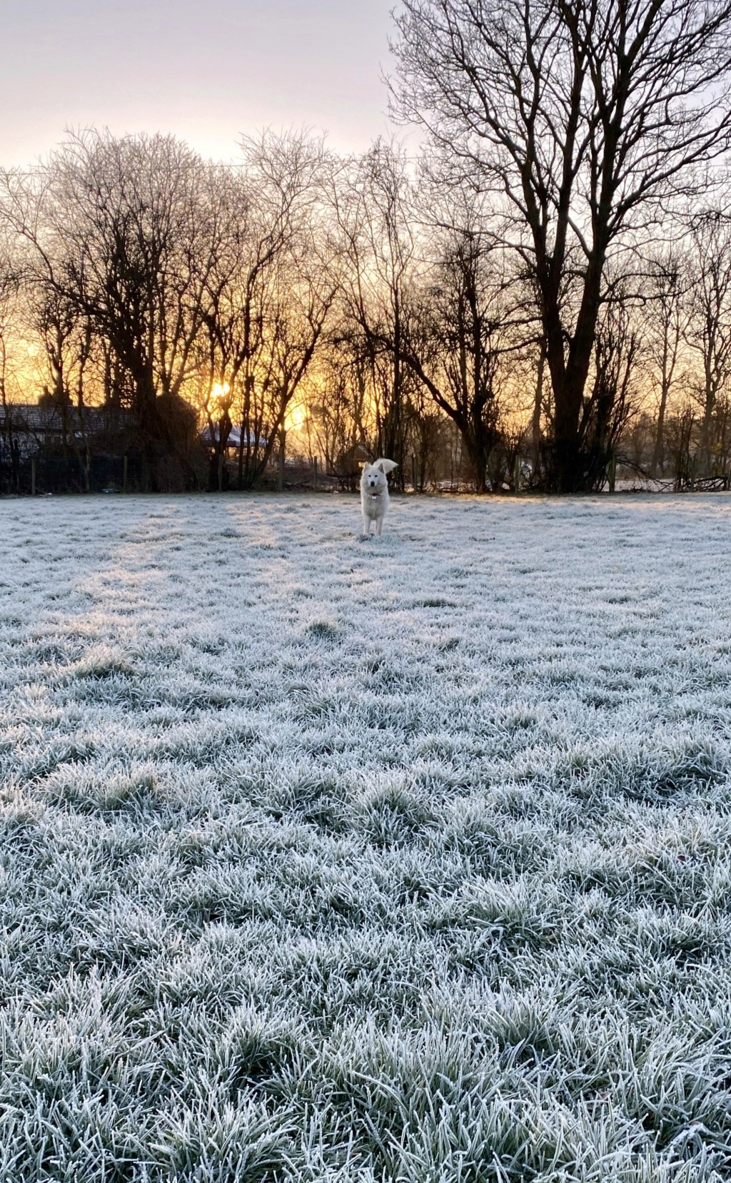 Frosty morning! A9ab1010