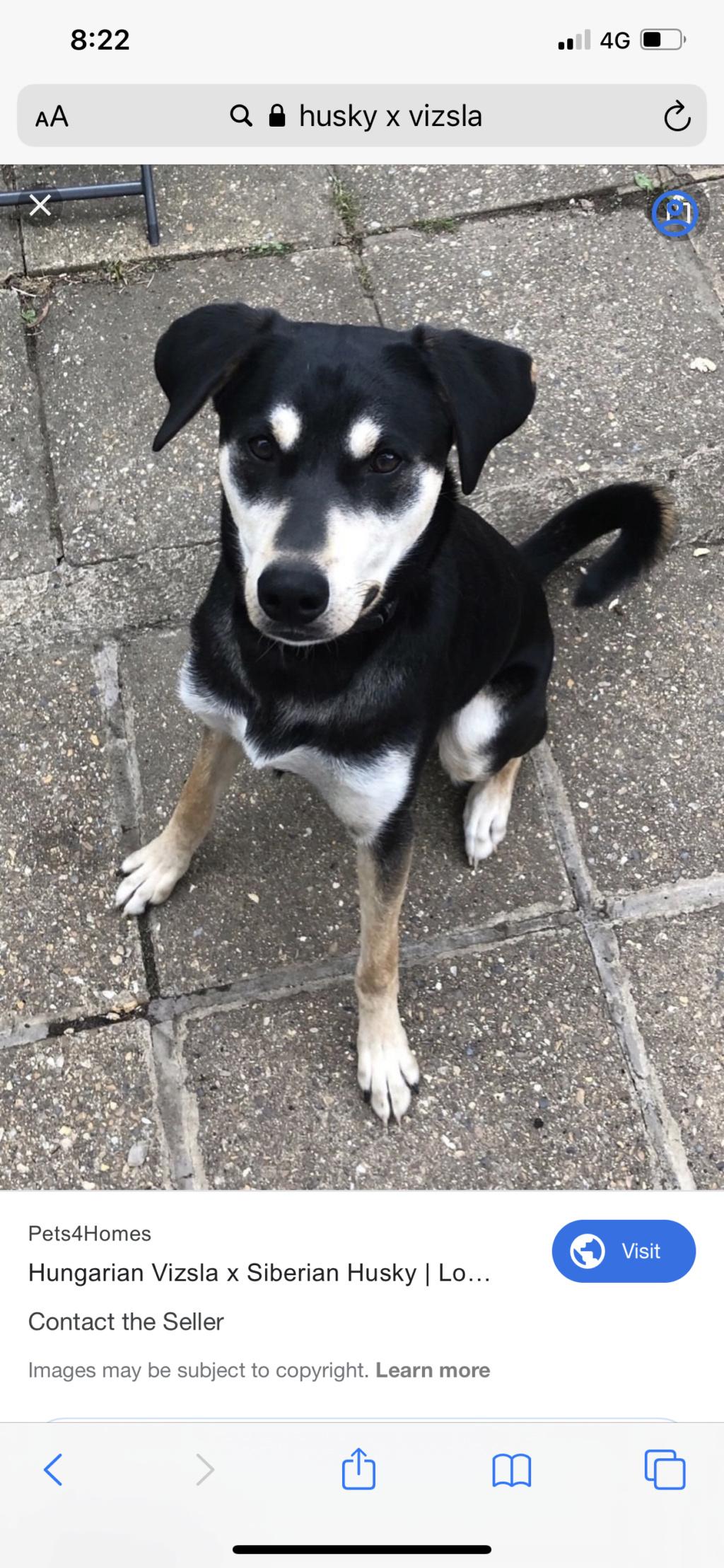 New dog owner  Ae443c10