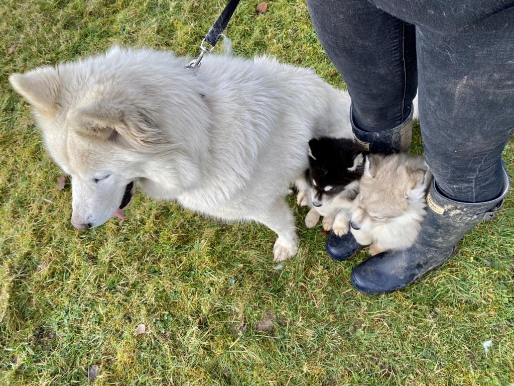 husky family???? Eda10e10