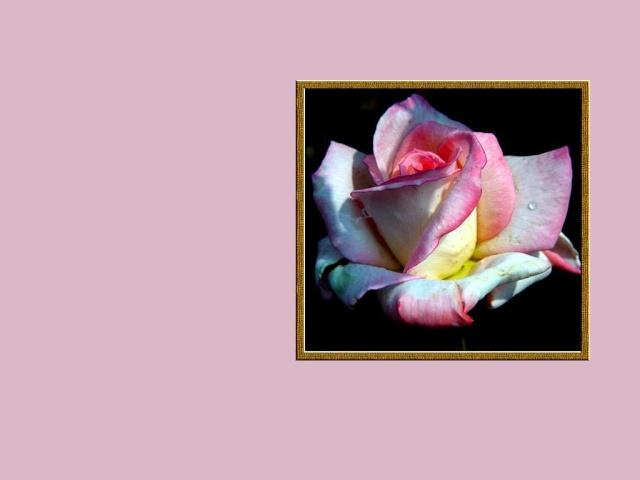 fête des mères, dites le avec des fleurs La_fle11