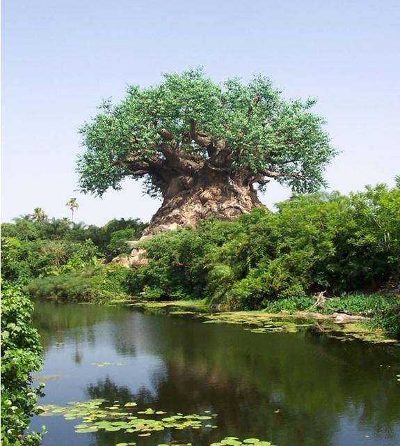 l'arbre de Noé au Mozambique Noa2_b10