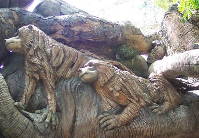 l'arbre de Noé au Mozambique Noa3_b10