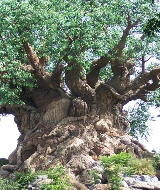 l'arbre de Noé au Mozambique Noa4_b10