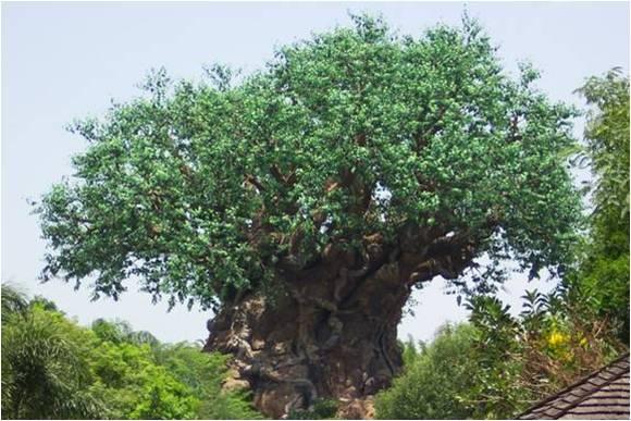 l'arbre de Noé au Mozambique Noa510