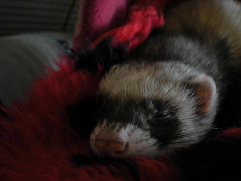Ma belle Marmotte et sa ptite Faro ! - Page 6 Dscn5310