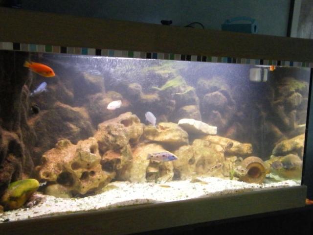 votre aquarium ou votre bassin Dscf0511