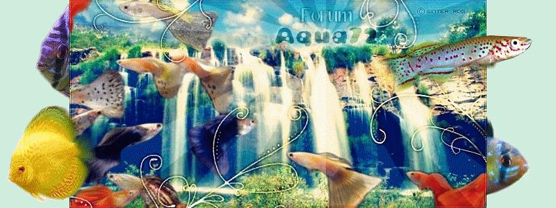 Aqua72, L'Aquariophilie De La Sarthe