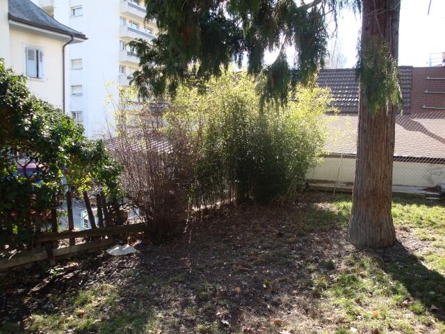 Mon jardin en construction Dsc01114