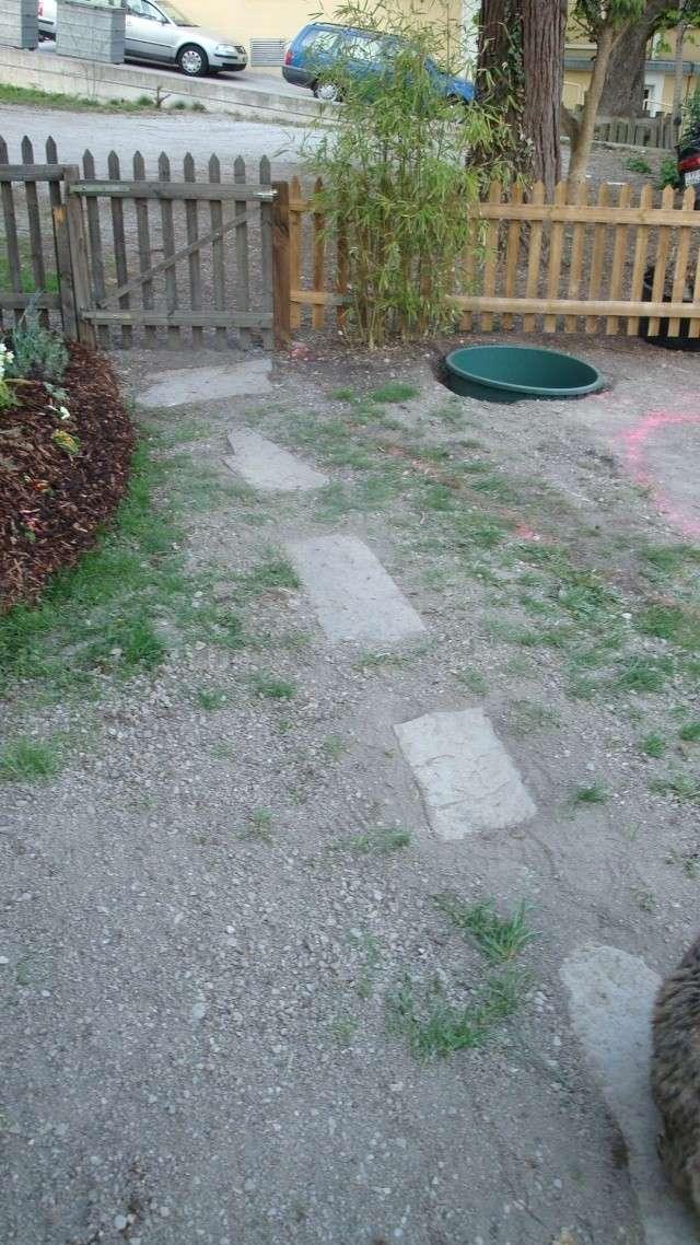 Mon jardin en construction Dsc01218