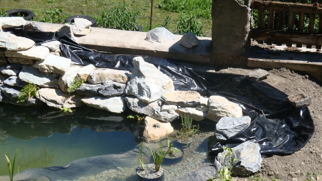 Mon jardin en construction Dsc01310