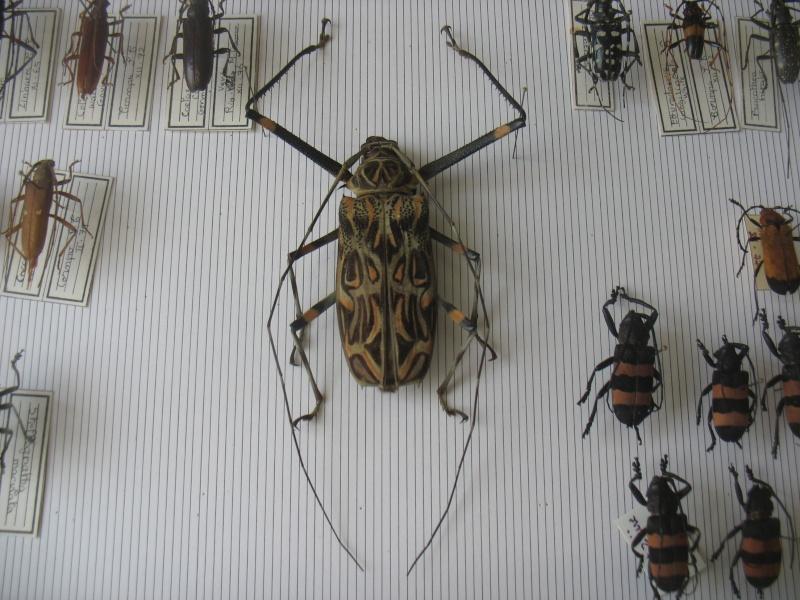 VIEUX BOUQUINS Insect10