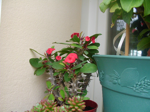 Un post sur les dernières fleurs + (Surprise :D ) 01110