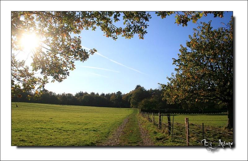 Chemin Paysag11