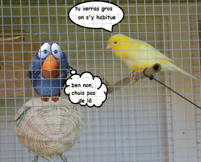nos animaux de compagnies ! - Page 37 Captur10