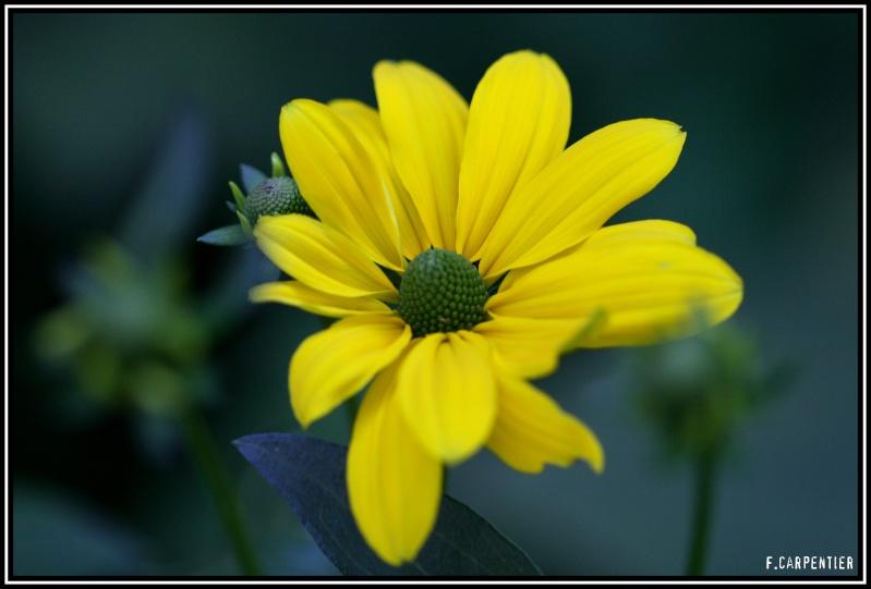 Le fil jaune Fleur-10
