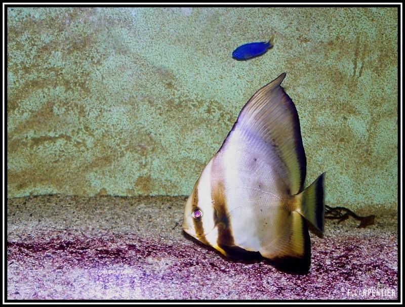 fil aquarium Poison10