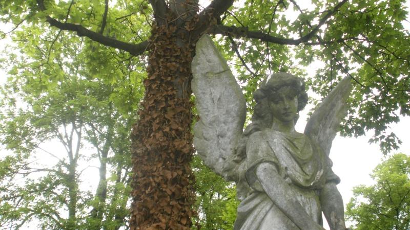 Photos d'Anges Dscn3011