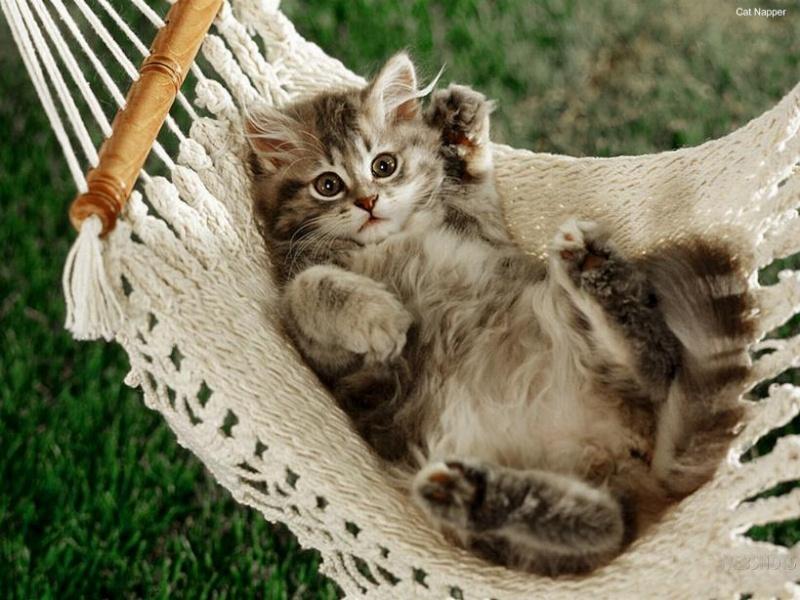 """Concours photos """"Les chats"""" du 3 février au 10 février - Page 3 855b1110"""