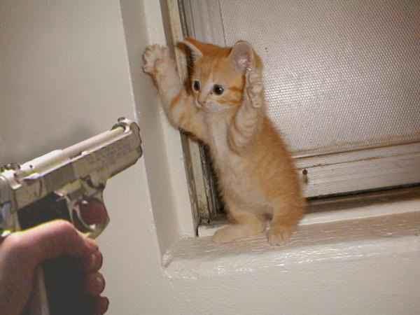 """Concours photos """"Les chats"""" du 3 février au 10 février - Page 2 Image012"""