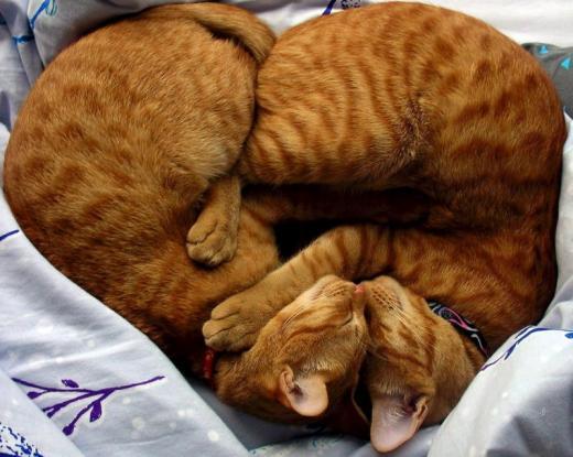 """Concours photos """"Les chats"""" du 3 février au 10 février - Page 3 Uv9ept10"""