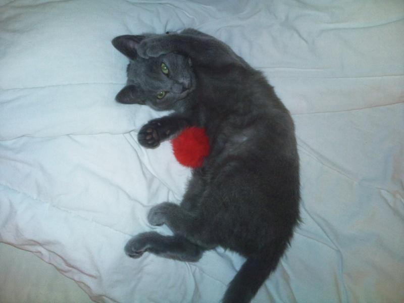 [Chatons adoptées] 4 chatons (3 gris et 1 noire) et leur maman (noire) dans l'Oise - Page 3 Elfy0110