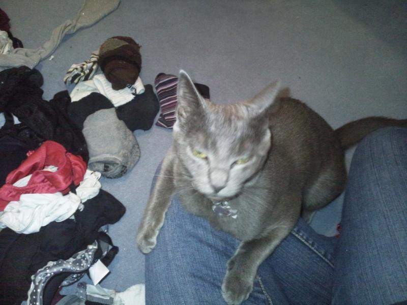 [Chatons adoptées] 4 chatons (3 gris et 1 noire) et leur maman (noire) dans l'Oise - Page 3 Elfy5010