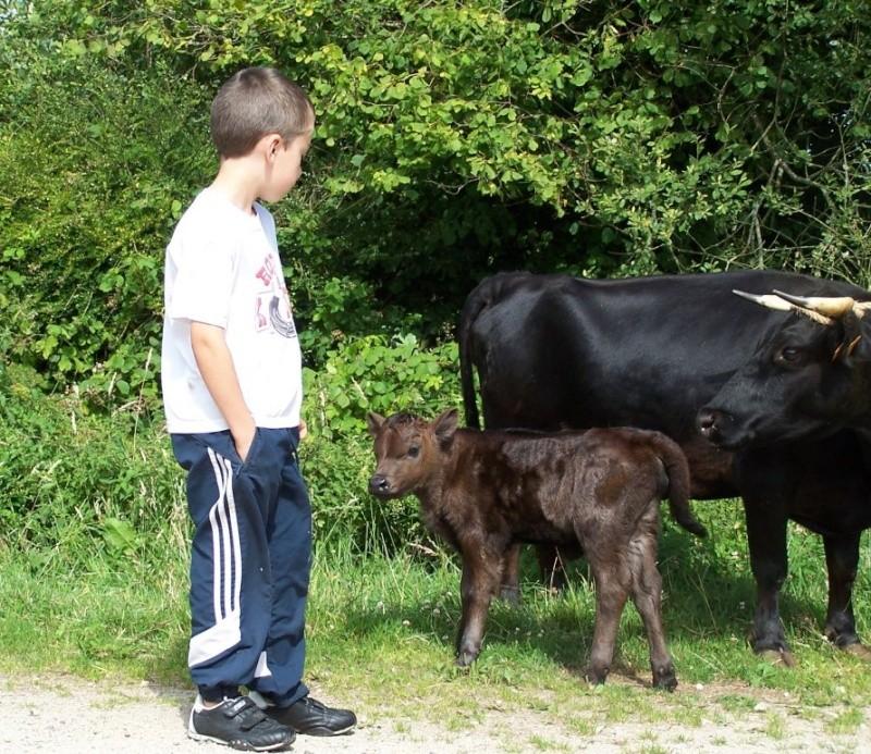 Les vaches dont je reve... Image610