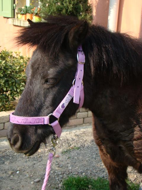 KIWI et CAPUCINE (décédée) - ONC poney présumées nées en 1990 - adoptées en octobre 2008 par caro38 - Page 2 Dsc07010