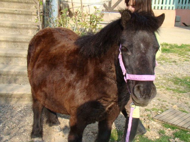 KIWI et CAPUCINE (décédée) - ONC poney présumées nées en 1990 - adoptées en octobre 2008 par caro38 - Page 2 Dsc07011