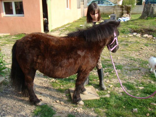 KIWI et CAPUCINE (décédée) - ONC poney présumées nées en 1990 - adoptées en octobre 2008 par caro38 - Page 2 Dsc07012