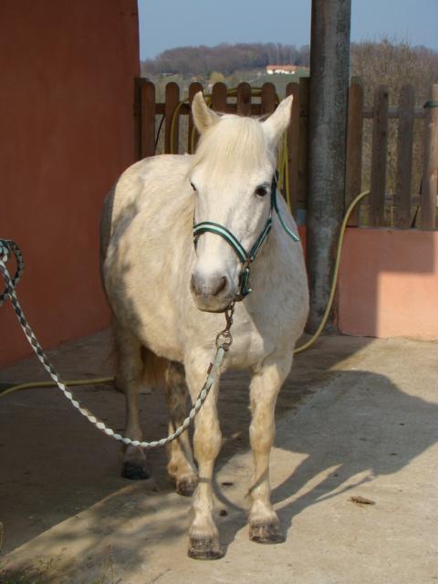 KIWI et CAPUCINE (décédée) - ONC poney présumées nées en 1990 - adoptées en octobre 2008 par caro38 - Page 2 Dsc07013