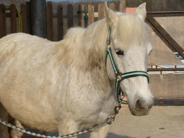 KIWI et CAPUCINE (décédée) - ONC poney présumées nées en 1990 - adoptées en octobre 2008 par caro38 - Page 2 Dsc07014