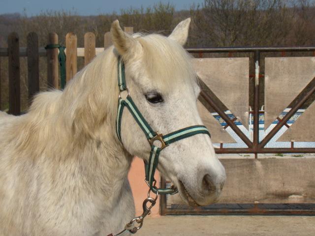 KIWI et CAPUCINE (décédée) - ONC poney présumées nées en 1990 - adoptées en octobre 2008 par caro38 - Page 2 Dsc07015
