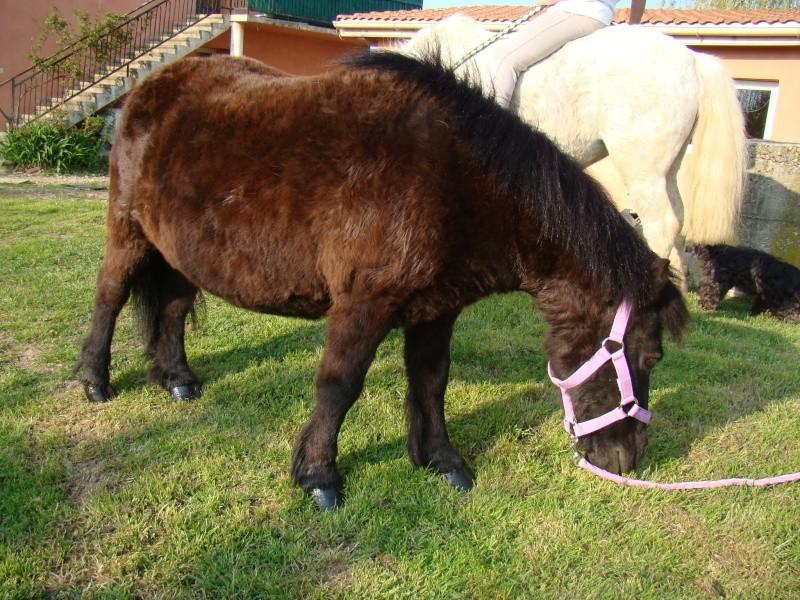 KIWI et CAPUCINE (décédée) - ONC poney présumées nées en 1990 - adoptées en octobre 2008 par caro38 - Page 2 Dsc07111