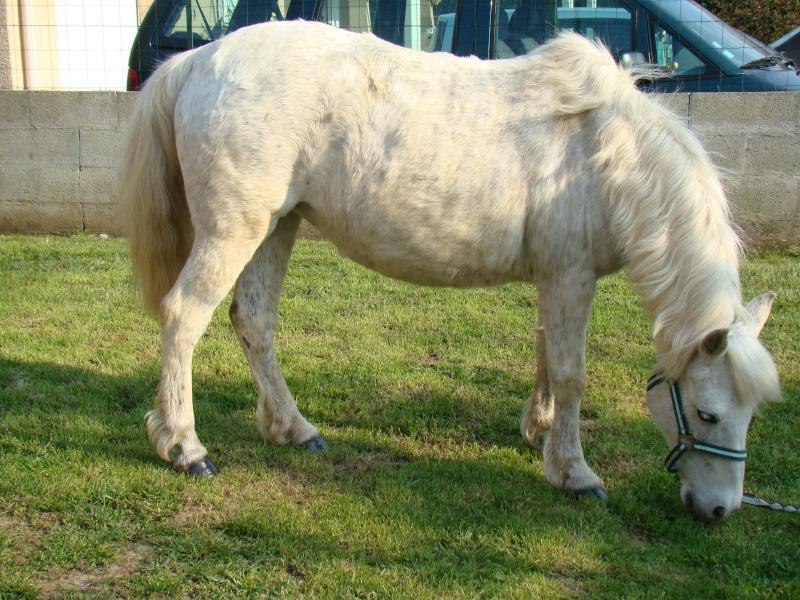 KIWI et CAPUCINE (décédée) - ONC poney présumées nées en 1990 - adoptées en octobre 2008 par caro38 - Page 2 Dsc07113