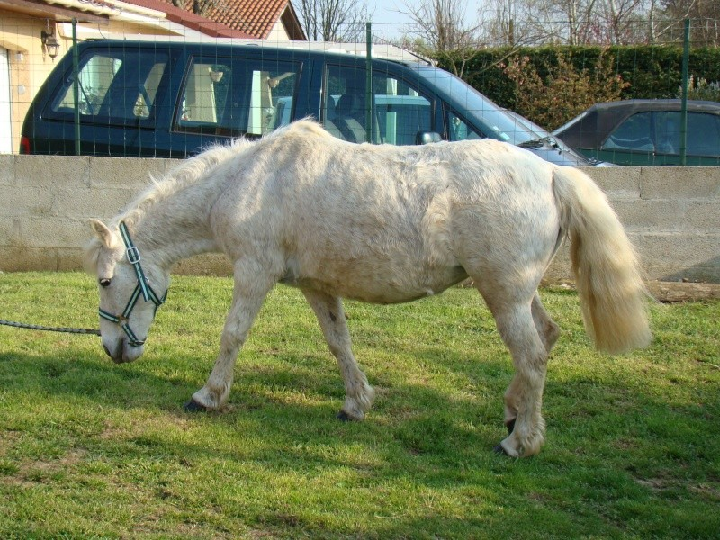 KIWI et CAPUCINE (décédée) - ONC poney présumées nées en 1990 - adoptées en octobre 2008 par caro38 - Page 2 Dsc07114